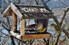 If you install bird feeders, birds will eventually visit your yard. Make A Bird Feeder, Bird Feeders, Bird Suet, Bird Tables, Lots Of Cats, Kinds Of Birds, Wooden Bird, Nesting Boxes, Backyard Birds