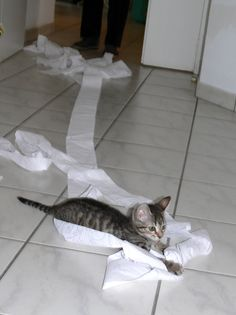 Sometimes I do this. Toilet paper is very dangerous