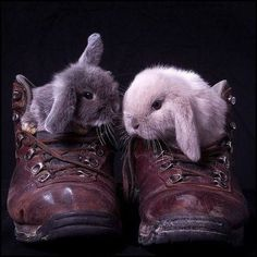 TopDeck and Flopsy looked a each other from their old, leather boots. TopDeck asked, Did you see Peter Rabbits new coat? Yeah, how long do you think it will take until we see it hanging in the garden to scare crows? Funny Bunnies, Baby Bunnies, Cute Bunny, Bunny Rabbits, Cute Animal Videos, Cute Animal Pictures, Animals Photos, Hamsters, Cute Baby Animals