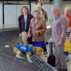 KLM Gevonden Voorwerpen Hond. FILMPJE! volgende x vergeet ik gewoon expres wat!!!