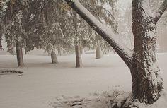 Snow1 by Johnny Gomez, via 500px