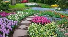How Pretty!  I just love this...I appreciate the beauty of bulbs even more since I have lived in Florida for 14 years...