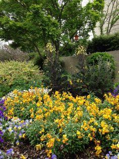 Spring in the Ripley Garden 2016.