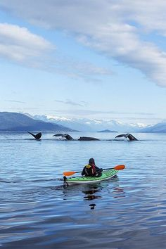 Kayak Fishing Women Kayak with whales - A sea kayaker watches as a group of Humpback whales lift their flukes, returning to the bountiful waters of SE Alaskas Stephens Passage, Tracy Arm and Coast Range mountains rise beyond. MR_Ed Emswiler, ID Kayak Camping, Canoe And Kayak, Kayak Fishing, Lake Kayak, Ocean Kayak, Kayaks, Outdoor Life, Outdoor Fun, Oh The Places You'll Go