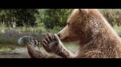 Centre Parcs - Bears