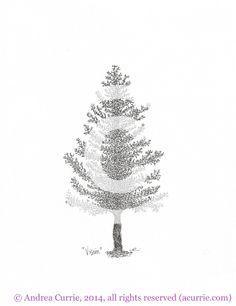 Fine art tree drawings by Andrea Currie, using methods such as stippling, cross-hatching and shading to employ classical pen and ink techniques.   Fine Artist, Tree Drawings, freelance illustrator, Toronto, Collingwood, Vancouver, Canada, corporate interiors, home décor.