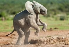 Stand - up by johan barnard on 500px