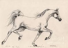 Výsledek obrázku pro arabian horse drawing