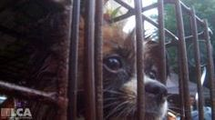 Last Chance for Animals Exposes Severe Cruelty Inside the Slaughterhouses of China's Yulin Dog Meat Festival