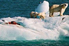 8 voyages sur des navires Hurtigruten - news Arctique Antarctique : ours blancs, morses, phoques, manchots à voir pendant 7 jours #video #pluzz