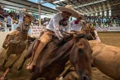 Charrería – The art of Mexican horsemanship - http://www.pikipiki.co.za/charreria-mexican-horsemanship/ - Mexican Cowboys and Señoritas. This is not your average cowboy rodeo event. This photo essay captures the drama of the sport Charreria best described as traditional Mexican horsemanship. It's a fast paced sport packed with action and passion.   #overland #overlanding #adventuretravel #travel #Motorcycle