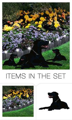 """Beautiful black dog"" by fantasiegirl ❤ liked on Polyvore featuring art"