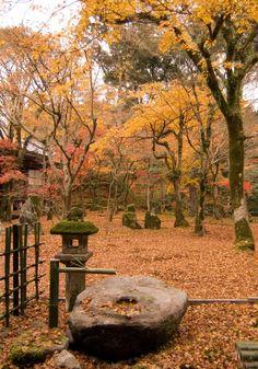 The garden at Komyozenji, Dazaifu, Fukuoka. 光明禅寺の庭の紅葉、福岡県の太宰府市