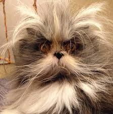 Image result for werewolf cat
