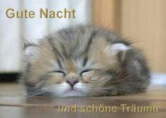 Gute Nacht und schöne Träume!