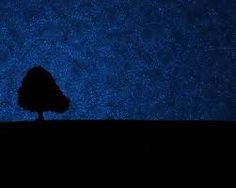 Image result for fotos de noite com arvores