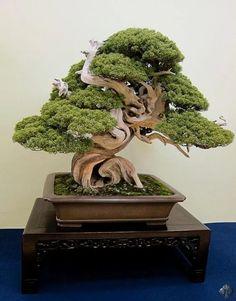 Foto: #bonsai