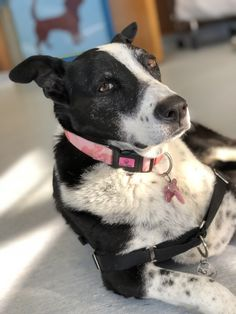 Is it because Border Collies are dogs known for being smart? Why does Noemi have such a deep and thoughtful face?