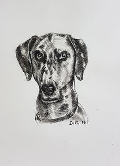 #charcoal #33domy #pastel #art #dog #pencil