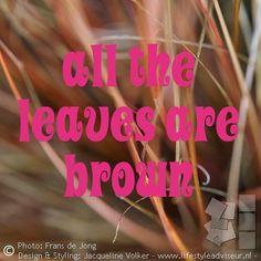 Detail van het bruine siergras Carex comans 'Bronze form'. Groenblijvend –pardon, bruinblijvend -  in de winter.  Foto uit het album 'Bohemian voortuin', bekijk het hele project. Link in profiel. ------------------------------------------------------------------------------------- Detail of brown ornamental grass Carex comans . In this case not an evergreen, but 'everbrown' in winter.  Image of project: Small front yard in hippie chic, bohemian garden style. Photo gallery: link in bio…