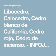 Libocedro, Calocedro, Cedro blanco de California, Cedro rojo, Cedro de incienso. - INFOJARDIN.