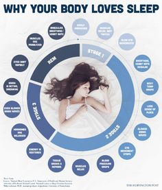 This illustrates the stages of sleep that your body goes through. It also illustrates how the body heals itself and what is healed as you go through various sleep stages Health And Beauty, Health And Wellness, Health Tips, Health Fitness, Health Care, Stages Of Sleep, Stress, Brain Waves, Body Love