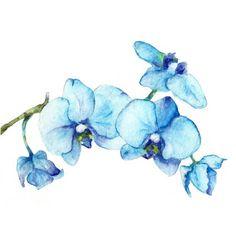 Bleu orchidées One - impression d'Art de la nature turquoise peinture aquarelle 8 x 10-open édition impression-fleur de printemps bleu