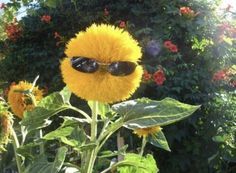 Funny flower quotes and sayings. Includes funny flower quotes from Delta Burke, George Burns, and other celebrities. Flower Quotes, Flower Sayings, Daisy Quotes, Cursed Images, Reaction Pictures, Mellow Yellow, Picture Wall, Wall Collage, Flower Power