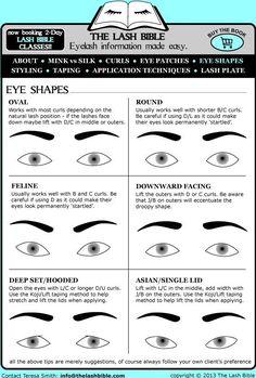 THE LASH BIBLE - Eyelash information made easy.