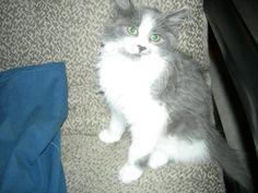 Penny Cat | Pawshake Toronto
