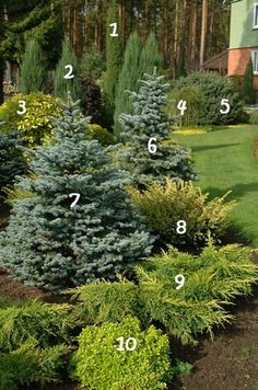ornamental plants, landscaping design, pine, trees, shrubs, plants, fruits, ornamental plants, ornamental plants