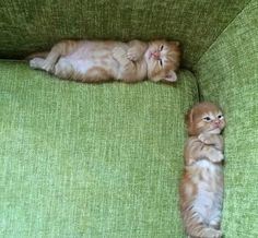 They look like they had a fight :( (i.it) submitted by Zed_Elyas to /r/kittens 0 comments original - - Cute Kittens - LOL Memes - in Clothes - Kitty Breeds - Sweet Animal Pictures by Visualinspo Cute Kittens, Cats And Kittens, Kitty Cats, Funny Kitties, Orange Kittens, Baby Kittens, Baby Dogs, Cute Funny Animals, Funny Animal Pictures