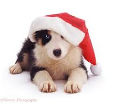 Christmas Border Collie Christmas Day Merry Christmas Card Puppy Holiday Dogs Santa Claus Dog Puppies Xmas