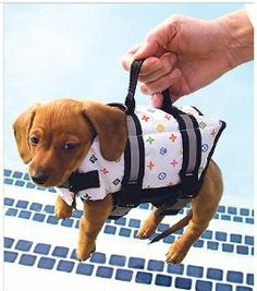 Sweet little life jacket, with handle, so you can scoop them out of the water, quickly.