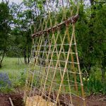 15 ways to Make a Trellis for your Garden.  Here's a link to 15 different ways you can make trellises for both vegetable gardens and flower beds, many are simple in design (and to make) while others are more detailed and fancy (with a bit of woodworking skill required). Quite a selection of materials used such as bamboo, wooden poles and sticks, lumber, wire mesh, etc.