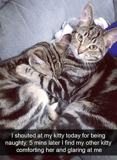 One cat is seen comforting a friend, after she was told off by her owner for being naughty...
