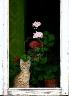 """""""There are few things in life more heartwarming than to be welcomed by a cat."""" --Tay Hohoff"""