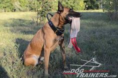Buy now durable training gear. This Jute Bite Dog Tug with Handle is made to train your dog's prey drive. Belgian Malinois Training, Belgian Malinois Dog, Dog Training Equipment, Training Your Dog, Dog Harness, Dog Leash, Dog Muzzle, Dog Items, German Shepherds