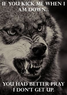 Save Gray Wolf, buy quality products and provide wolf sanctuary!, quotes life Save Gray Wolf, buy quality products and provide wolf sanctuary! Wisdom Quotes, True Quotes, Well Said Quotes, Qoutes, Boxe Fight, Lone Wolf Quotes, Wolf Tattoos For Women, Wolf Stuff, Wolf Spirit Animal