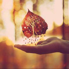 Autumn leaf on hand