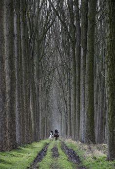 35PHOTO - Danny Vangenechten - The Forest