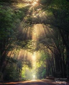 Nature 518054763386473551 - With mist on a sunny day you are able to capture amazing sunrays in the forest. In the misty mornings about an hour after sunrise you can find the sunbeams. Source by nenyasepia Terre Nature, Beautiful World, Beautiful Places, Wonderful Places, Landscape Photography, Nature Photography, Photography Ideas, Portrait Photography, Wedding Photography