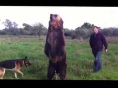 Posiblemente el mejor oso del mundo :D - http://frikilogia.com/posiblemente-el-mejor-oso-del-mundo-d/  Entrenado por rusos, como no xD Via:Xabier Tejero Landa