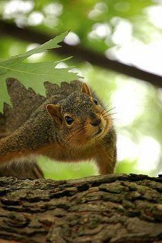 Squirrel looking up