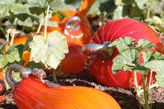 Blown glass pumpkins.