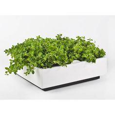 D&M Depot Karoo Verticale Plantenbak 40 x 40 cm Garden Tools, Herbs, Gardening, Live, Yard Tools, Garten, Herb, Outdoor Power Equipment, Lawn And Garden