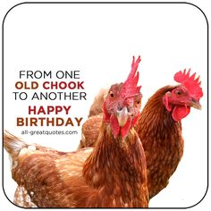 From One Old Chook To Another - Happy Birthday | all-greatquotes.com #HappyBirthday #BirthdayWishes #Funny