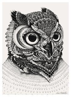 Owl portraits on Behance in Owl