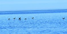 Photo by Louise Tremblay Sea Birds, Coastal, Waves, Ocean, Sky, Awesome, Animals, Heaven, Animaux