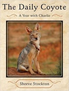 The Daily Coyote: A Story of Love, Survival, and Trust in the Wilds of Wyoming: Amazon.com: Books